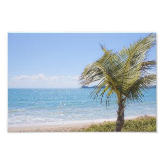 Fotografía azul de la palma del mar y de coco foto