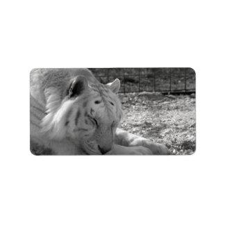 fotografía blanca del bw del tigre el dormir del g etiquetas de dirección