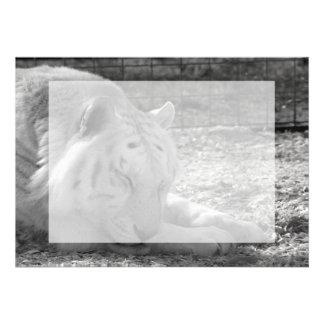 fotografía blanca del bw del tigre el dormir del g