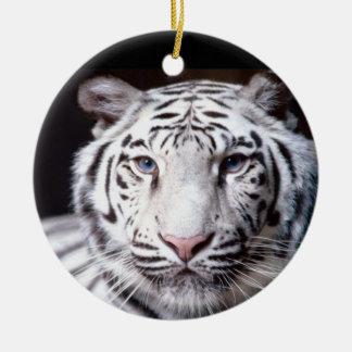 Fotografía blanca del tigre de Bengala Adorno Navideño Redondo De Cerámica