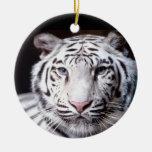 Fotografía blanca del tigre de Bengala Ornamentos Para Reyes Magos