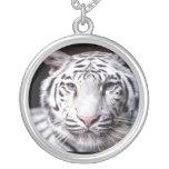 Fotografía blanca del tigre de Bengala Grimpolas