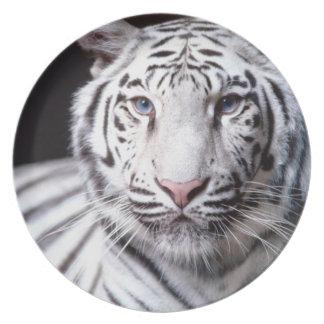 Fotografía blanca del tigre de Bengala Plato De Cena