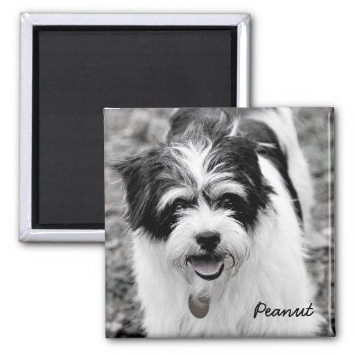Fotografía blanco y negro 1 del perro imanes de nevera