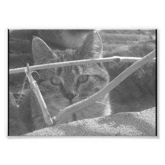 Fotografía blanco y negro de un gato de tigre foto