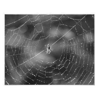 fotografía blanco y negro de una araña y de una fotografías