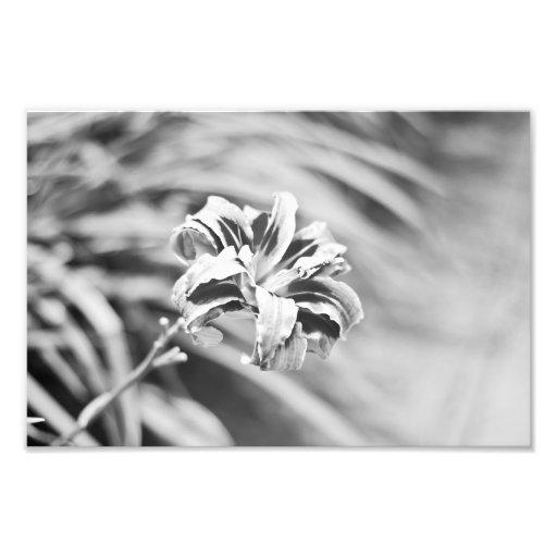 Fotografía blanco y negro elegante de la flor