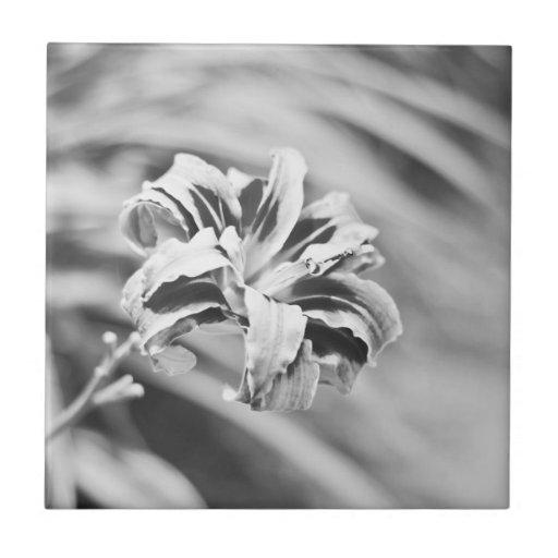 Fotografía blanco y negro elegante de la flor teja