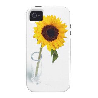 Fotografía brillante soleada del girasol vibe iPhone 4 fundas