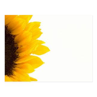 Fotografía brillante soleada del girasol postal
