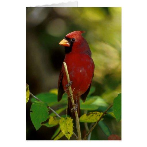 Fotografía cardinal felicitaciones