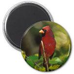 Fotografía cardinal imán de frigorifico