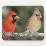 Fotografía cardinal septentrional Mousepad Alfombrillas De Raton