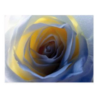 Fotografía color de rosa de neón tarjetas postales