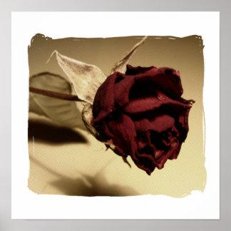 Fotografía color de rosa secada - color póster