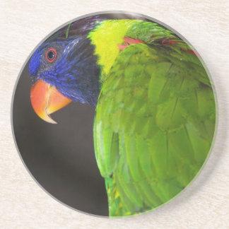 Fotografía colorida del loro de Lorikeet del arco  Posavasos Para Bebidas