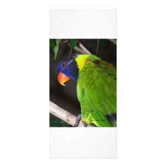 Fotografía colorida del loro de Lorikeet del arco Tarjetas Publicitarias Personalizadas