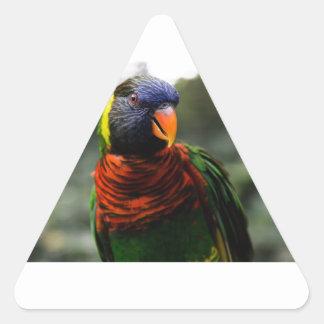Fotografía de detenido colorida del Parakeet Pegatina Triangular