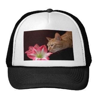 Fotografía de Digitaces del Amaryllis del gato de Gorras