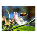 Fotografía de la abeja y de la flor blanca