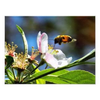 Fotografía de la abeja y de la flor blanca cojinete
