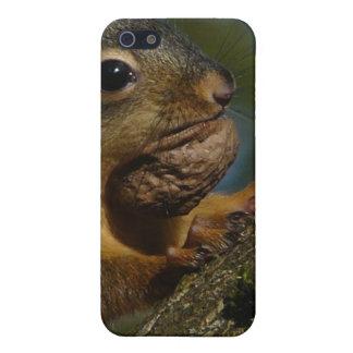 Fotografía de la ardilla salvaje con la nuez iPhone 5 cobertura