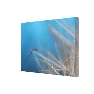 Fotografía de la bella arte de los azules del dien lona estirada galerias