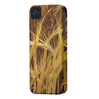 Fotografía de la cebada funda para iPhone 4 de Case-Mate