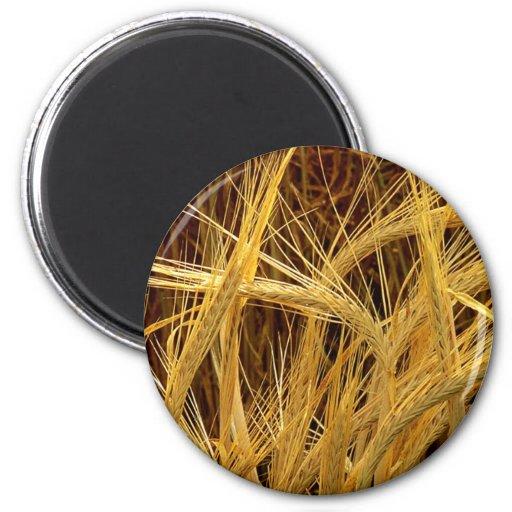 Fotografía de la cebada imán redondo 5 cm