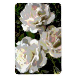 Fotografía de la flor de los rosas blancos imán