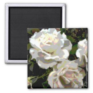 Fotografía de la flor de los rosas blancos imán cuadrado