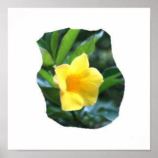 Fotografía de la flor de trompeta amarilla impresiones