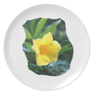 Fotografía de la flor de trompeta amarilla platos