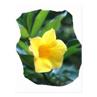 Fotografía de la flor de trompeta amarilla postal