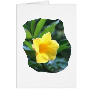 Fotografía de la flor de trompeta amarilla tarjeta pequeña