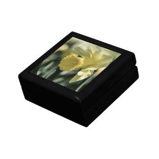 Fotografía de la flor del narciso cajas de joyas