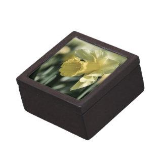 Fotografía de la flor del narciso cajas de recuerdo de calidad