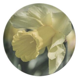 Fotografía de la flor del narciso plato de comida