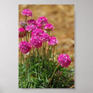Fotografía de la flor - rosa de mar - rosa y verde póster
