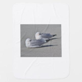 Fotografía de la gaviota manta de bebé