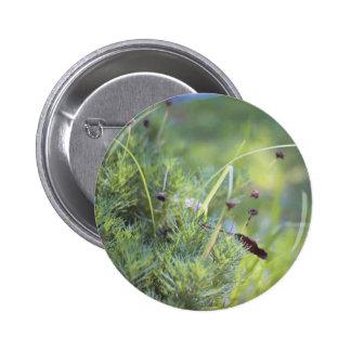 Fotografía de la hierba pin