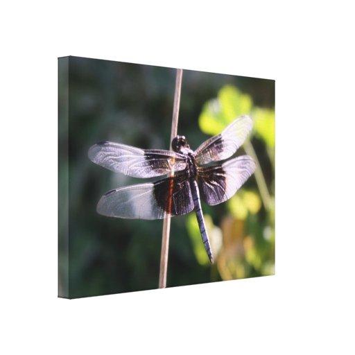 Fotografía de la libélula de la desnatadora de la  impresiones de lienzo