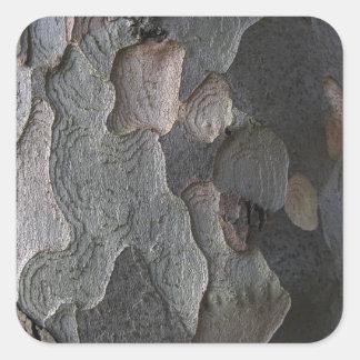 Fotografía de la macro de la corteza de árbol calcomanía cuadradase