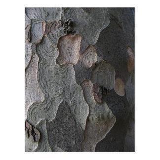 Fotografía de la macro de la corteza de árbol postal