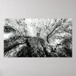 Fotografía de la mancha de tinta del árbol de arce poster