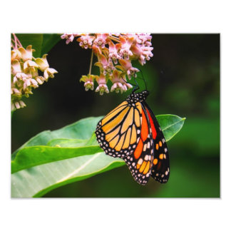 Fotografía de la mariposa de monarca fotografía