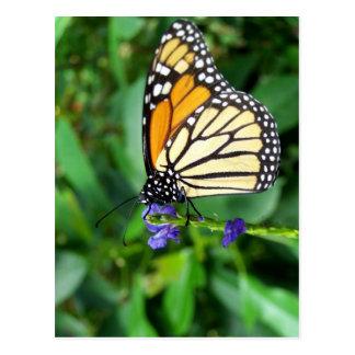 Fotografía de la mariposa postal