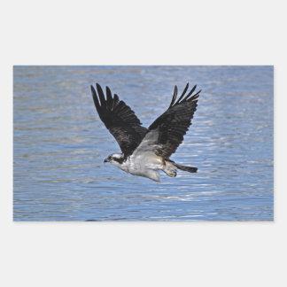 Fotografía de la naturaleza de Eagle de pez Pegatina Rectangular