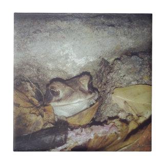 Fotografía de la naturaleza de Le Toad Nighttime Azulejo Cuadrado Pequeño