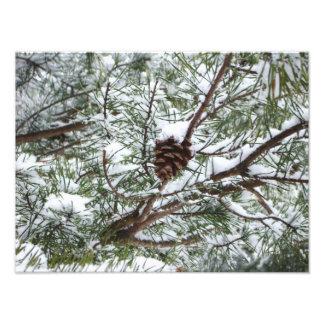 Fotografía de la naturaleza del invierno del cono cojinete